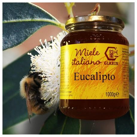 Eucaliptus Honey