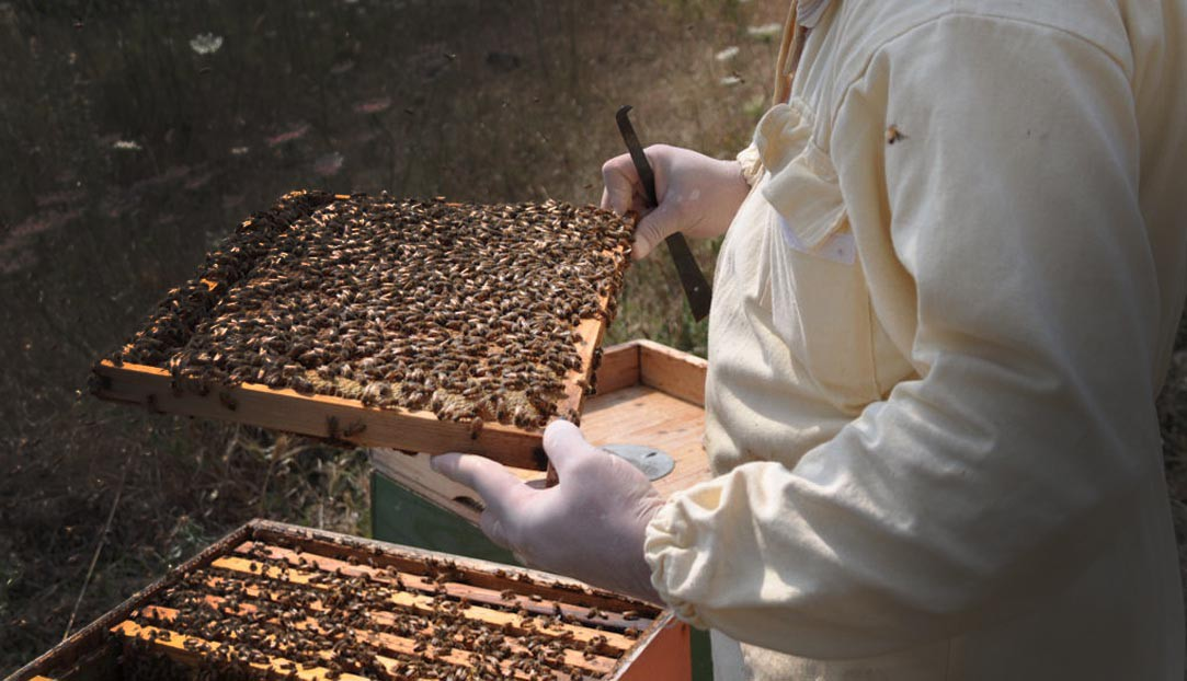 Farm Honey Bees
